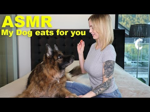 My German Shepherd tries ASMR for the first time – Cutenes-overload – Dog eating different Types of